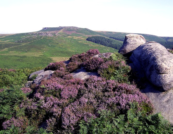 Ling Heather near Over Owler Tor