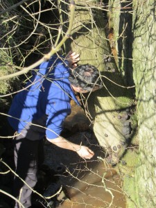 Searching for King Alfred's Cakes (fungus)
