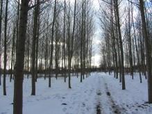 Woodland near Ashbourne